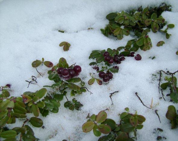 Соковыжималка винограда своими руками